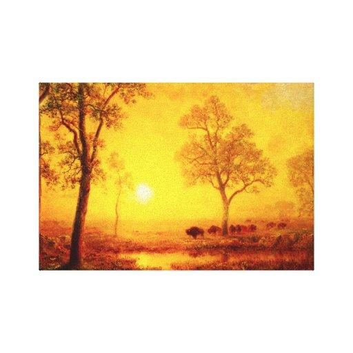 Puesta del sol del búfalo en el abrigo de la lona  impresión en lienzo