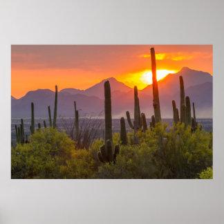 Puesta del sol del cactus del desierto, Arizona Póster