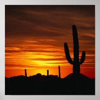 puesta del sol del cactus posters