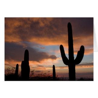 Puesta del sol del desierto del Saguaro Felicitacion