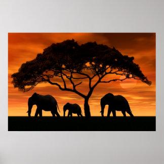 Puesta del sol del elefante del acacia posters