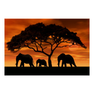 Puesta del sol del elefante del acacia impresiones