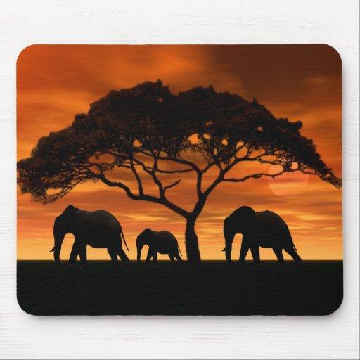 Puesta del sol del elefante del acacia tapetes de raton