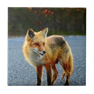 Puesta del sol del Fox Azulejo Cuadrado Pequeño