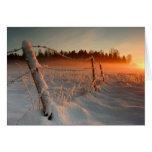 Puesta del sol del invierno del país tarjetas