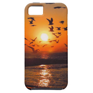 Puesta del sol del lago Erie iPhone 5 Fundas