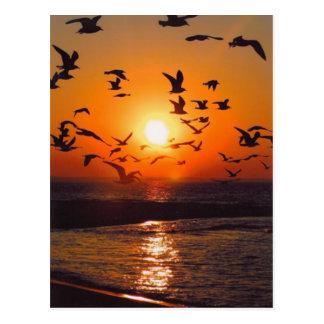Puesta del sol del lago Erie Postal