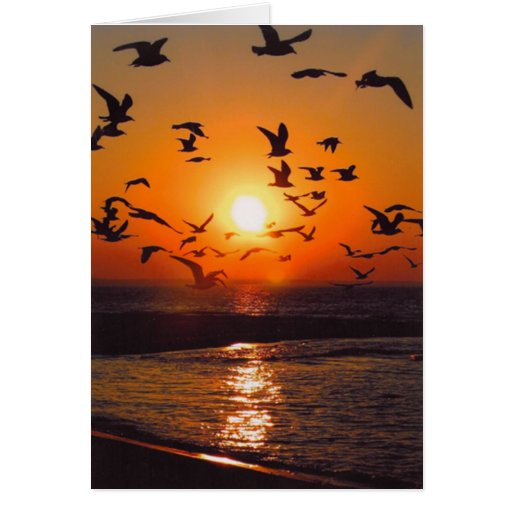 Puesta del sol del lago Erie Tarjeton