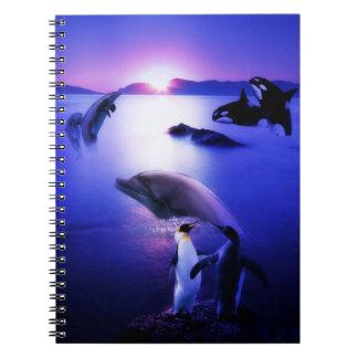 Puesta del sol del océano de los pingüinos de los  notebook