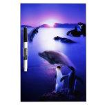 Puesta del sol del océano de los pingüinos de los  pizarra