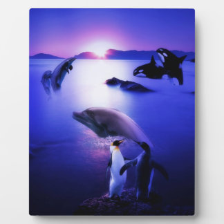 Puesta del sol del océano de los pingüinos de los  placa para mostrar