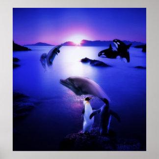 Puesta del sol del océano de los pingüinos de los  póster