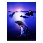Puesta del sol del océano de los pingüinos de los postal