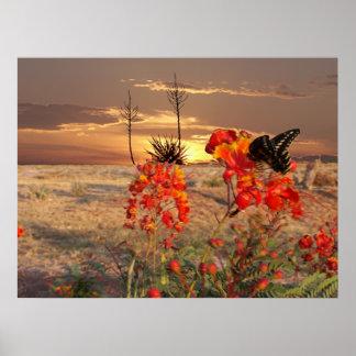 Puesta del sol del oeste de Tejas Poster