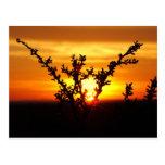 Puesta del sol del oeste del desierto de Tejas Tarjetas Postales