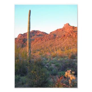Puesta del sol del parque nacional de Saguaro Fotografías