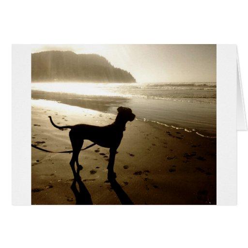 Puesta del sol del perrito de great dane tarjeta de felicitación