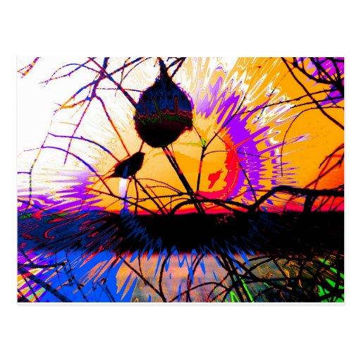 Puesta del sol del pinzón tarjetas postales
