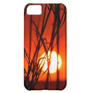 Puesta del sol detrás del bambú