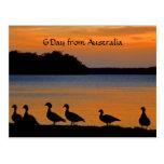 Puesta del sol Ducky Tarjetas Postales