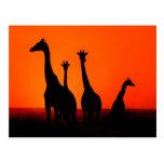 Puesta del sol en África Postal
