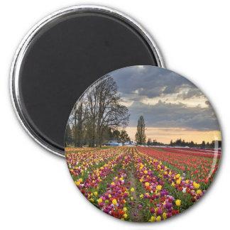 Puesta del sol en el imán de la granja del tulipán