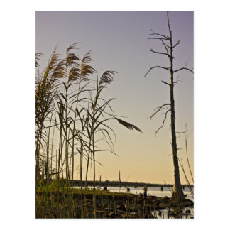 Puesta del sol en el pantano de Luisiana Postal