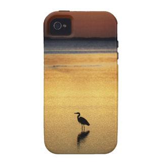 Puesta del sol en el pantano iPhone 4 fundas