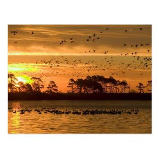 Puesta del sol en la postal de Chincoteague