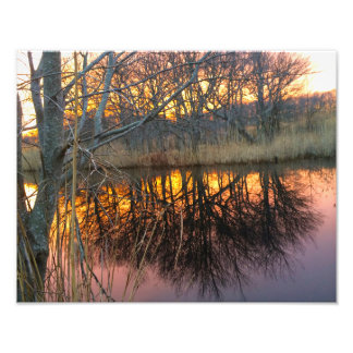 Puesta del sol en la reflexión de los árboles cojinete