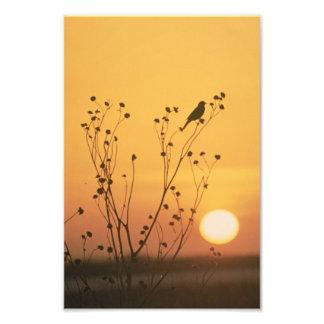Puesta del sol en la reserva del nacional de cojinete