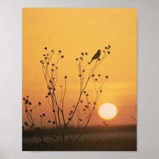 Puesta del sol en la reserva del nacional de póster