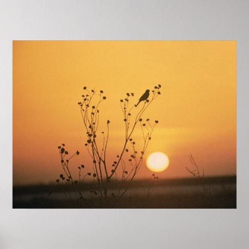 Puesta del sol en la reserva del nacional de Tewau Póster