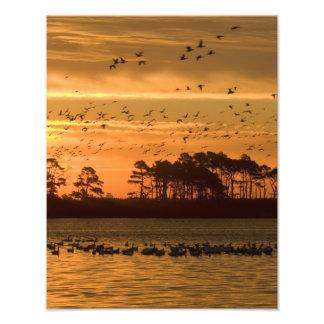 Puesta del sol en la reserva Virginia de Chincotea Impresion Fotografica