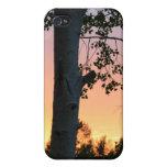 Puesta del sol en los árboles iPhone 4 cobertura