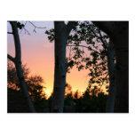 Puesta del sol en los árboles postal