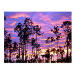 Puesta del sol en los marismas parque nacional, la postal