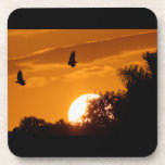 Puesta del sol en los marismas posavasos