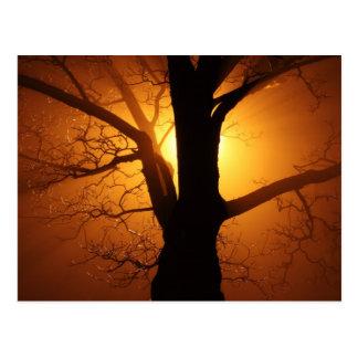 Puesta del sol en niebla postal