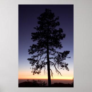 Puesta del sol en parque nacional de secoya poster