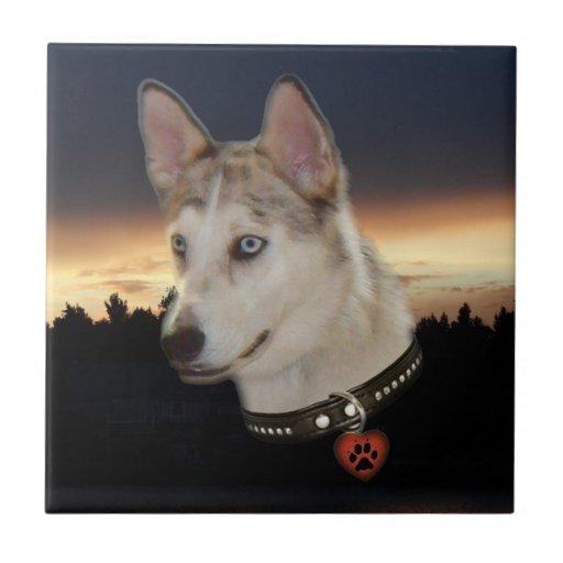 Puesta del sol fornida del perro azulejo cerámica
