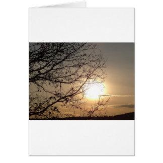 Puesta del sol hermosa con los branchs tarjetas