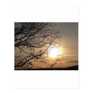 Puesta del sol hermosa con los branchs postal