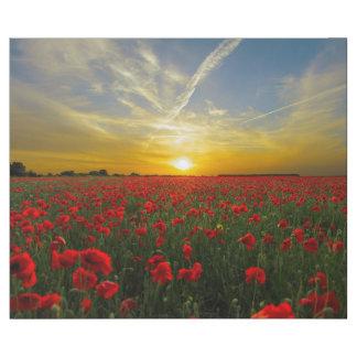 Puesta del sol hermosa del campo de flor de la papel de regalo