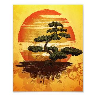 Puesta del sol japonesa del árbol de los bonsais fotografías