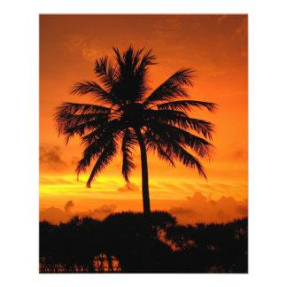 "Puesta del sol maravillosa folleto 4.5"" x 5.6"""
