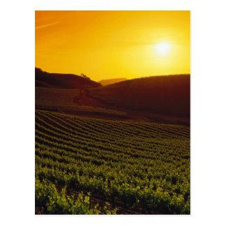 Puesta del sol Napa Valley Postales