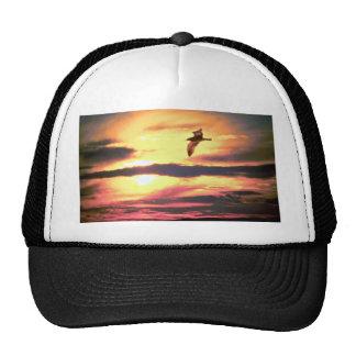 Puesta del sol, pájaro en vuelo gorras