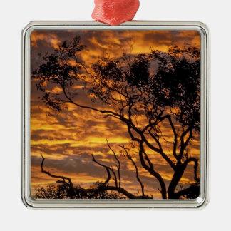 Puesta del sol, parque nacional de Uluru-KATA Tjut Ornamento De Navidad