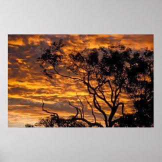 Puesta del sol, parque nacional de Uluru-KATA Tjut Poster